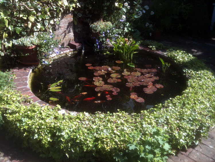 Courtyard Pond in Lewes